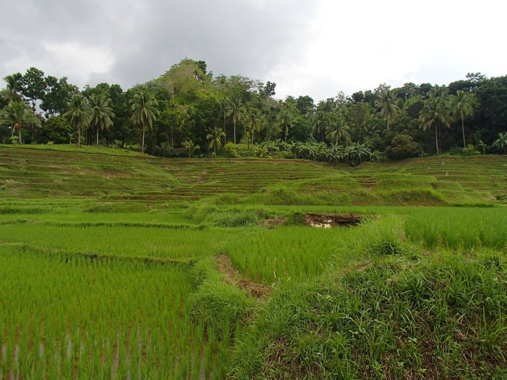 Candijay rice terraces